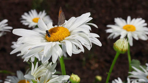 Butterfly And A Bee stock footage
