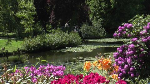 idyllic park landscape Footage