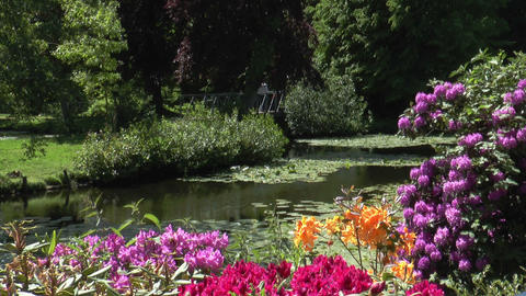 idyllic park landscape Stock Video Footage