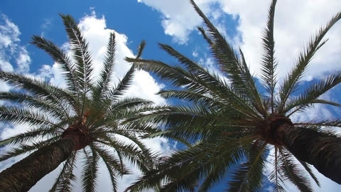Two palm trees and sky with clouds Stock Video Footage