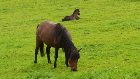 Two horses on the meadow Stock Video Footage