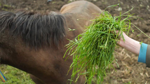 Horse eats from hand Stock Video Footage