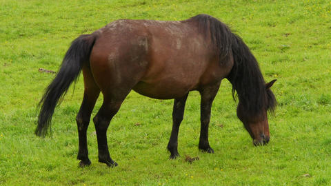 Horse eats grass on the meadow Stock Video Footage