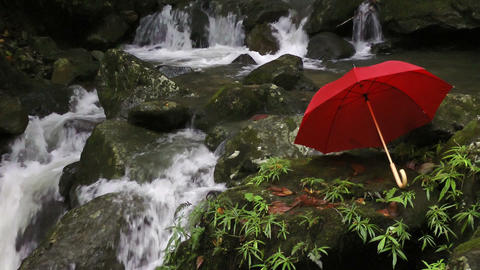 Red umbrella next to waterfall in rainforest Footage