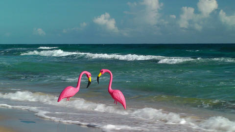 Two plastic flamingos on Isabel Beach Stock Video Footage