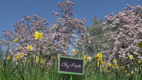 Frühlingsblumen und blühender Baum im City Park Footage