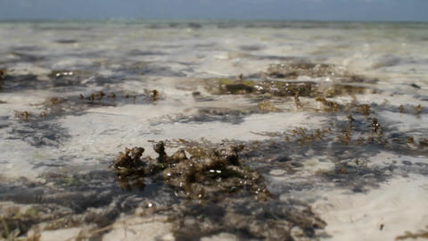 Low tide in the bay Stock Video Footage