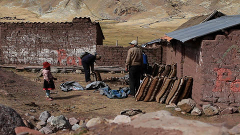 Village family get ready to pack potatoes Footage