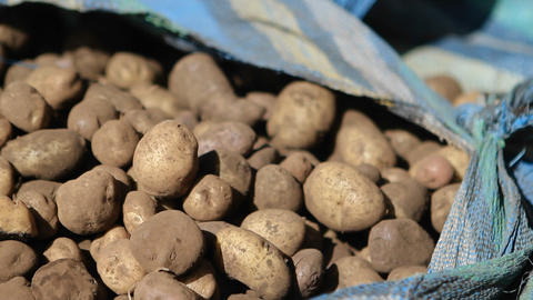 Potatoes waiting to be packed Stock Video Footage