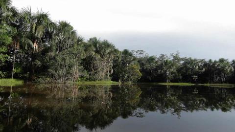 Quiet jungle pond Stock Video Footage