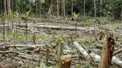 Workings cutting trees wear it has been clear cut Stock Video Footage