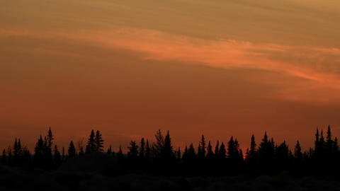 Sunset with silhouetted trees Stock Video Footage