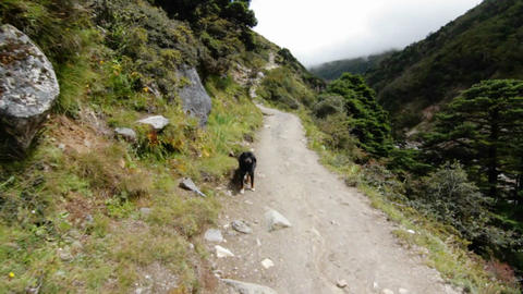 Mountain trail, dog comes down the trail Stock Video Footage
