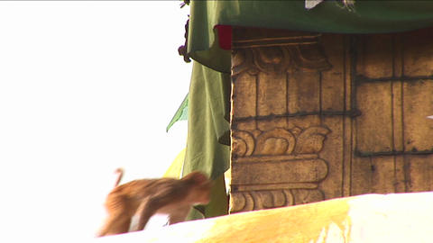 Monkey jumps on the Boudhanath Stupa Stock Video Footage