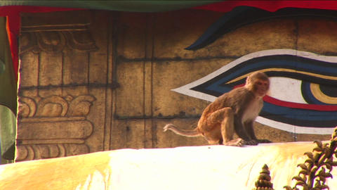Monkey jumps on the Boudhanath Stupa Footage