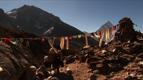 Yak passing under prayer flags and chorten Stock Video Footage
