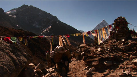 Yak passing under prayer flags and chorten Footage