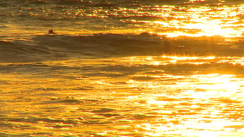 Surfing waves at sunset Footage
