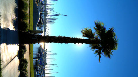 Vertical palm tree fronting a marina Footage