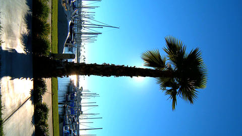 Vertical palm tree fronting a marina Stock Video Footage