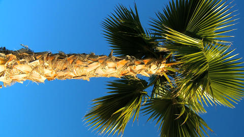 Vertical palm tree against blue sky Footage