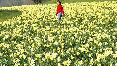 Flower Field Stock Video Footage