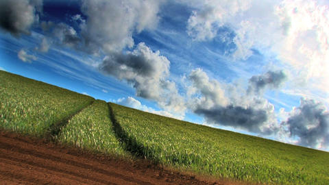 Dramatic time-lapse of clouds & crops growing in a field Stock Video Footage