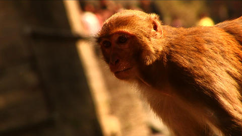 Monkey in the sunshine Stock Video Footage