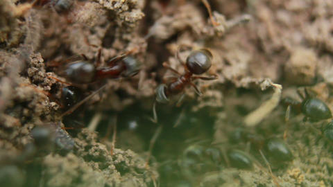 Ants 3 Stock Video Footage