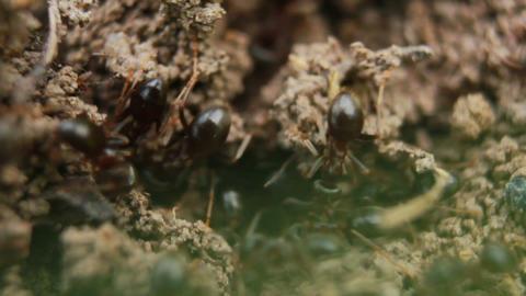Ants 3 Footage