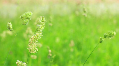 Grass 4 Stock Video Footage