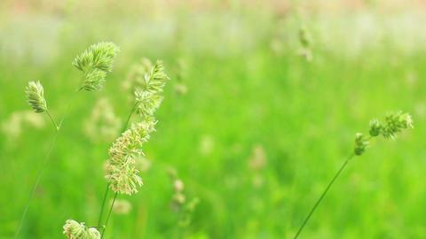 Grass 4 Footage