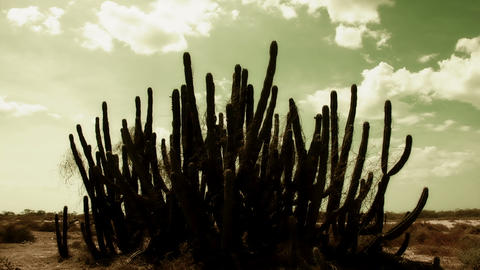 Cactus Timelapse 02 Stock Video Footage
