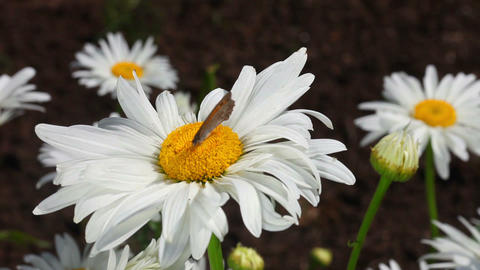 Butterfly on the flower Stock Video Footage
