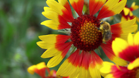 Bee at work Live Action
