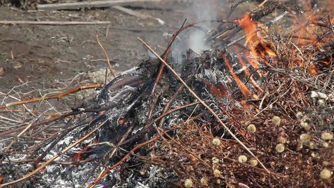 burning leaf Stock Video Footage