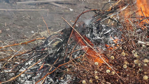 burning leaf Footage