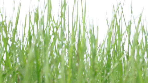 green grass in defocus Stock Video Footage