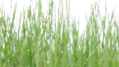 green grass in defocus Footage