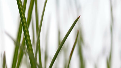 green grass close-up Stock Video Footage