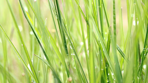 dew on green grass Stock Video Footage