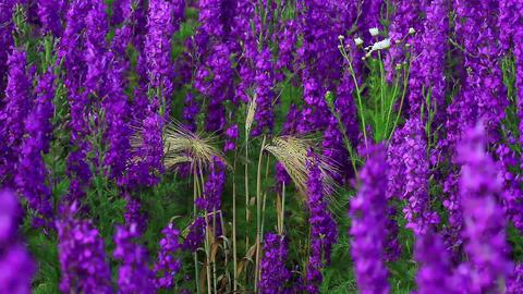 Field Of Globe Flowers On A Summer Meadow Footage