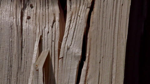 Close up of log of wood chopped in the machine Stock Video Footage