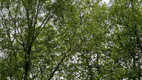 Wind and trees Stock Video Footage