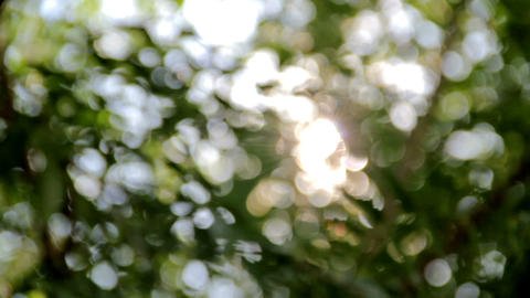 Abstract floral bokeh motion background Stock Video Footage