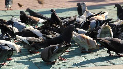 Pigeons feed on the sidewalk Stock Video Footage