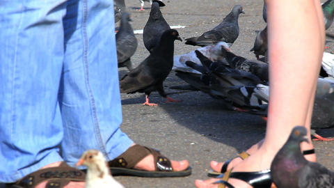 Pigeons feeding on sidewalk and couple talking Stock Video Footage