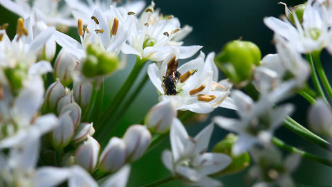 Wasp Footage