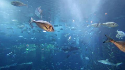 aquarium dubai mall Stock Video Footage