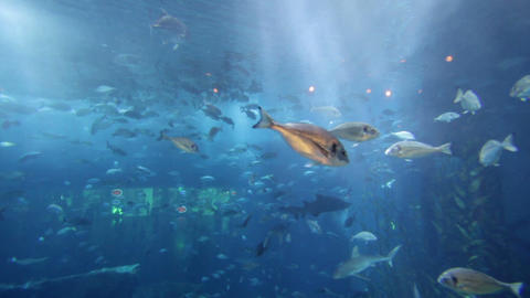 aquarium dubai mall Footage